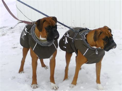 sweaters for dogs clothes for boxer dogs photo 1 dress the clothes for your pets
