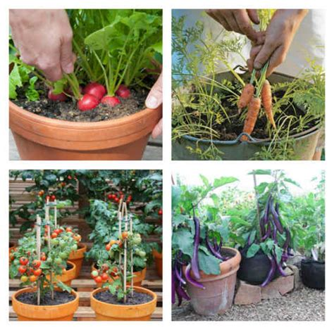 vegetables you can grow in pots 10 vegetables that you can easily grow in containers
