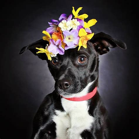 dogs with flowers guinnevere shuster helps get black dogs into new homes using photography