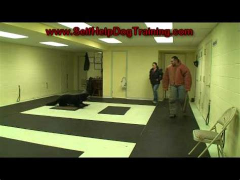 how to dogs to attack on command best way to teach a puppy to come when called k9 1 funnydog tv