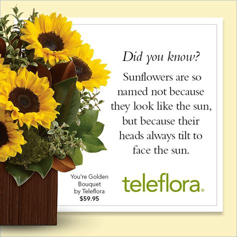 17 best images about sunflowers on