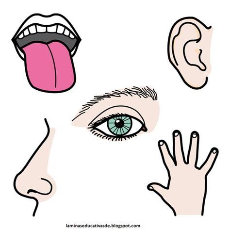 imagenes educativas los sentidos laminas educativas los 5 sentidos