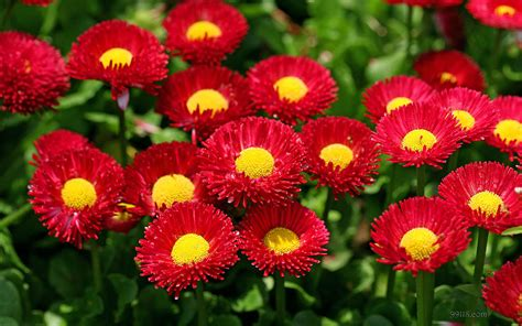 different names types of flowers name and meaning details typesofflower