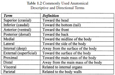 Planes And Anatomical Directions Worksheet Answers by Anatomical Terms Of Location Quiz Regions And