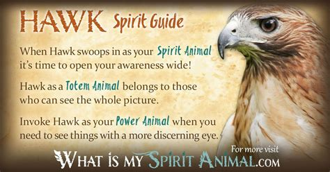 learning to fly if you allow your spirit to soar your mind and might just follow books hawk symbolism meaning spirit totem power animal