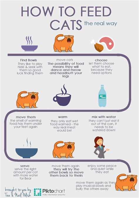 how to feed cats the real way infographic tea nail