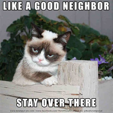 Angry Cat Good Meme - 20 laughable angry cat meme sayingimages com