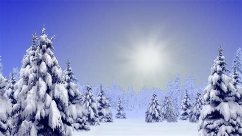 Wonderful landscape covered in pure white snow pine trees sway and