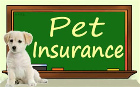 best puppy insurance best pet insurance for cats breeds picture