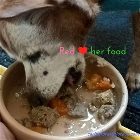 dog not eating old dog not eating caring for a senior dog