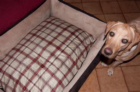 cucce per cani interno divano per dobermann sfoderabile arredo e corredo