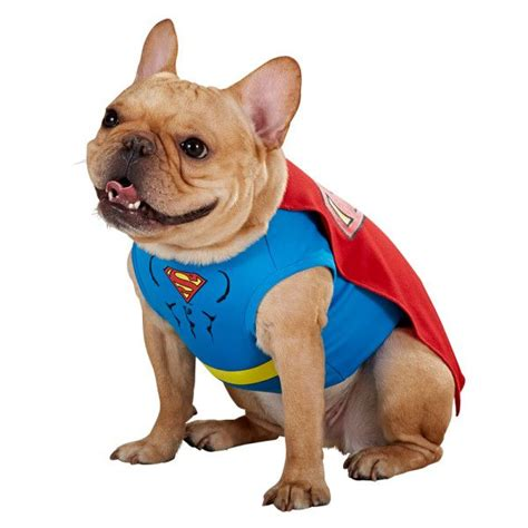 petsmart costumes 1000 images about monstercute on bret cats and dc comics
