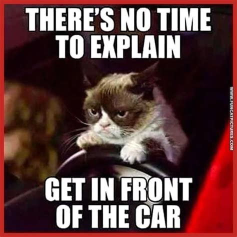 Funny No Meme - 40 very funny cat meme pictures and images