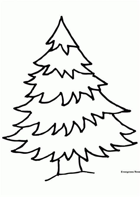 gambar pohon cemara clipart best