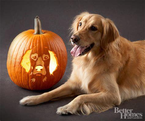 puppy pumpkin carving o lantern ideas