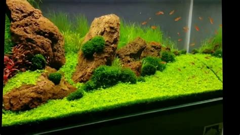 aquascape youtube aquascape iwagumi style 180 litres youtube