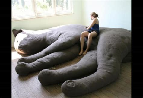 crazy couches image gallery sofa love