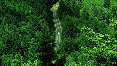forest road landscape aerial view wallpapers hd