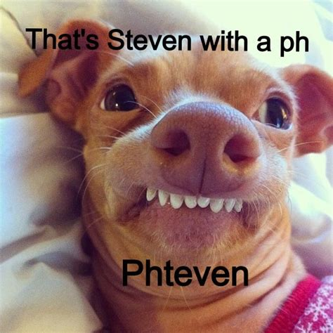 Stephen Dog Meme - dogs ph and faces on pinterest