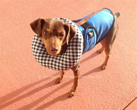 puppy bumpers pablo s picks puppy bumpers protect pooches from getting through gates the