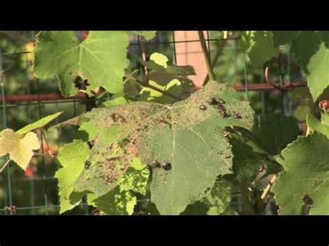 Organic Vegetable Garden Pest Control Youtube Organic Pesticides For Vegetable Garden