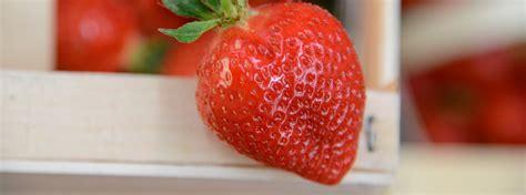 fruits rungis fruits et l 233 gumes grossistes et fournisseurs du march 233
