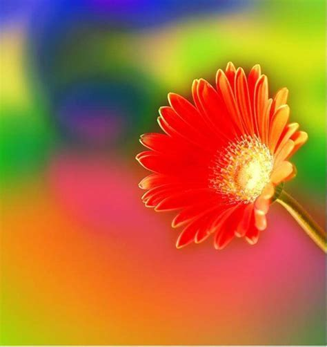 bright colored flowers brightly colored flower bright colors image 18658335