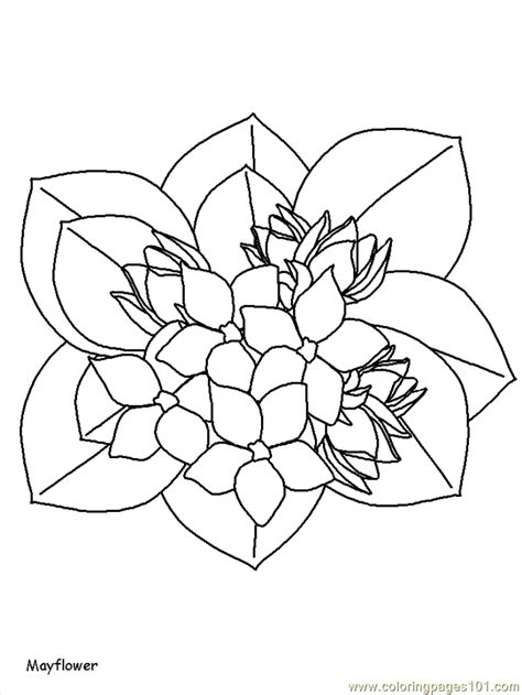 free realistic coloring pages of flowers realistic flower coloring pages printable coloring pages