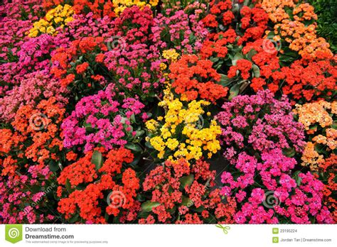 bed of flowers colorful flower bed stock photo image of park flora