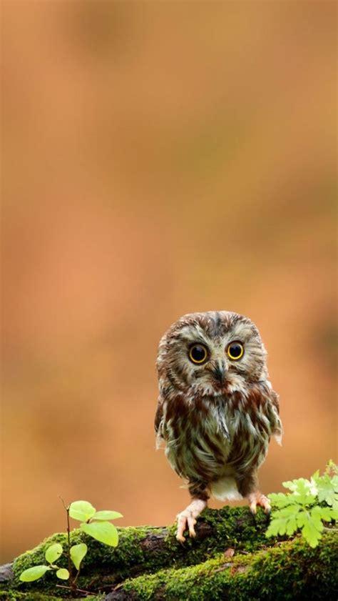 wallpaper iphone owl adorable baby owl iphone wallpaper iphone