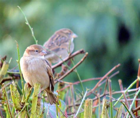 Rspb Big Garden Birdwatch Start Twitching by About A Brook The Rspb Big Garden Birdwatch A Family Affair