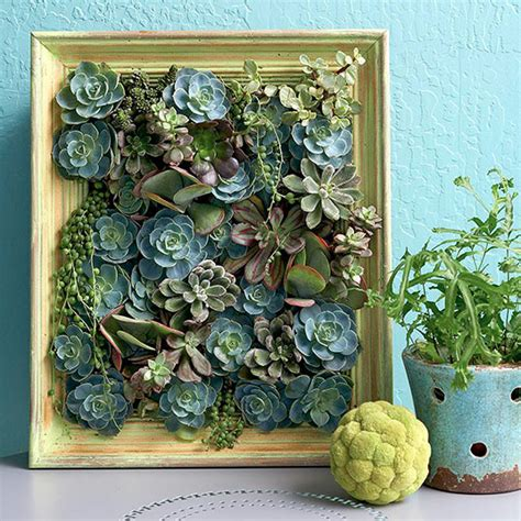 diy succulent projects my garden 5 innovative indoor apartment gardening ideas easy diy projects for gardening