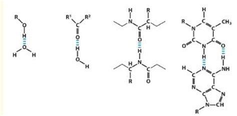 exle of hydrogen bond hydrogen bond