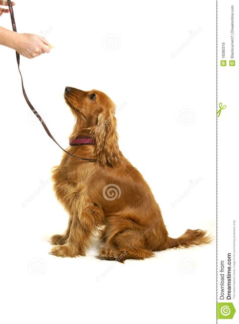 free puppy classes royalty free stock images image 16080319