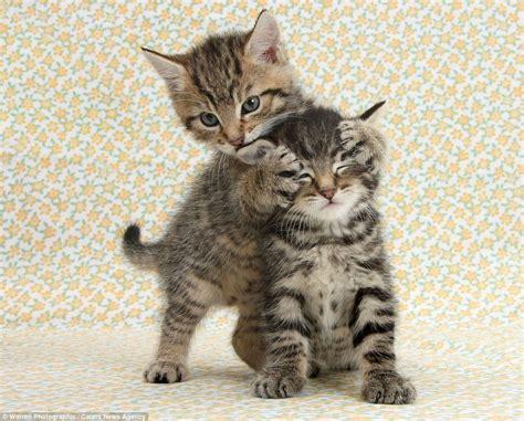 imagenes de niños jugando al gato y al raton el lado m 225 s tierno de los gatitos fosset y stanley