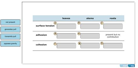 solved the roles of surface tension cohesion and adhesi