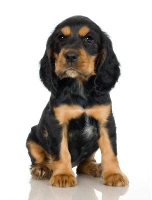 how much does a rottweiler puppy cost how much does the average puppy cost within the year care daily puppy