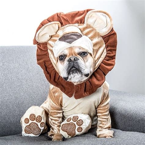 French Bulldog Giveaway - top 6 reasons why english bulldogs are the best in the world