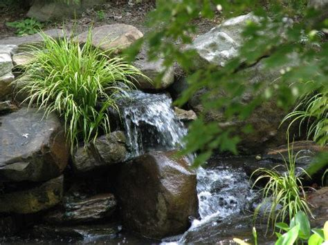 Uncc Botanical Gardens Uncc Picture Of Unc Botanical Gardens Tripadvisor