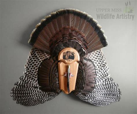 turkey fan mount template 17 best images about cool mounts taxidermy on