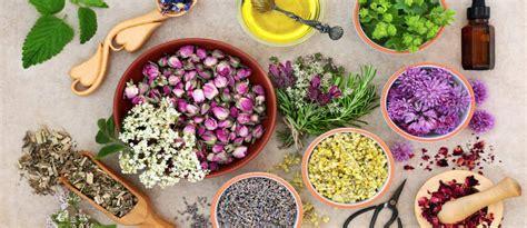 Obat Asam Lambung Mual nutrisi 6 obat herbal mu membantu mengatasi masalah