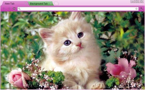 kitty kat themes 12 kitten chrome themes desktop wallpapers more for