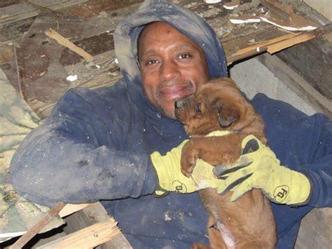 puppies for adoption st louis puppy rescue in east st louis gateway pet guardians