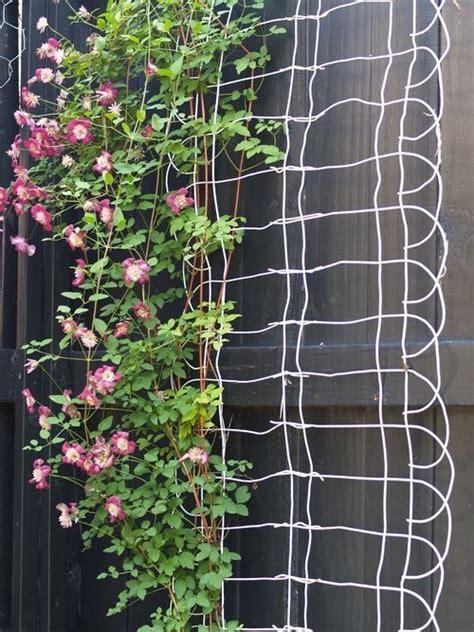 Cheap Garden Trellis Ideas Make This Trellis Out Of Recycled Wire Hangers Looks Like The Cheap Quot Rabbit Quot Fence To Me But