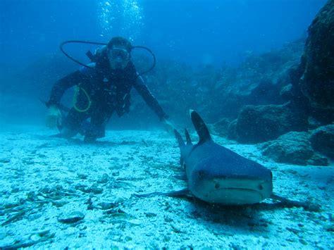 dive galapagos galapagos diving tours galapagos islands diving