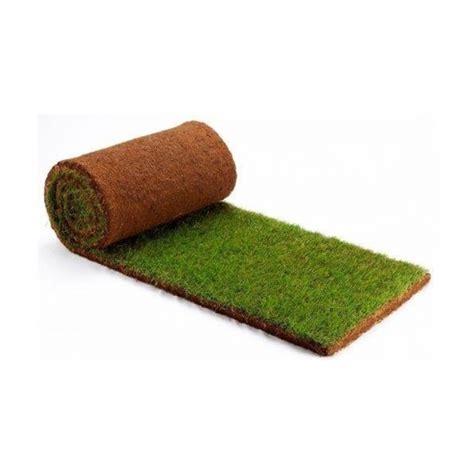 tappeto erba vera prato a rotoli in sardegna tappeto erboso di erba vera