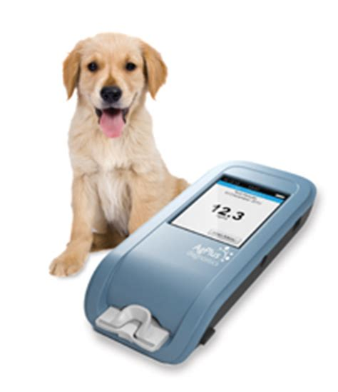 progesterone test for dogs new test in development for canine progesterone vet times