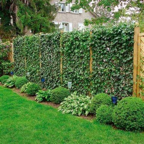 gartengestaltung vorschläge zaun pflanzen idee