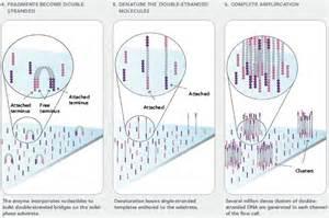 next generation sequencing anthony edward baldor