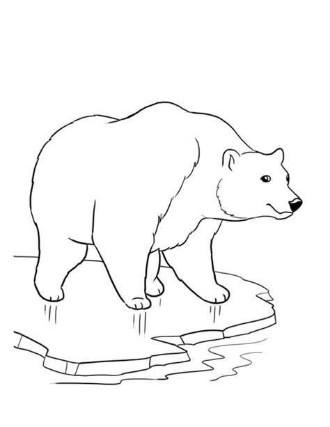 ice bear coloring page polar bear sketches sketch coloring page